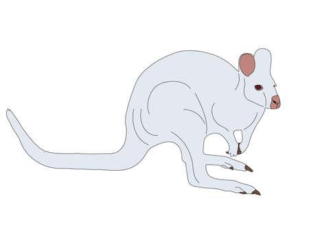 Digitally Handdrawn Illustration of a wildlife kangaroo isolated on white background Illustration