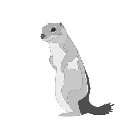Digitally Handdrawn Illustration of a wildlife ground squirrel isolated on white background