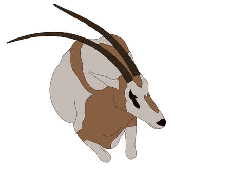 Digitally Handdrawn Illustration of a wildlife antelope --- isolated on white background
