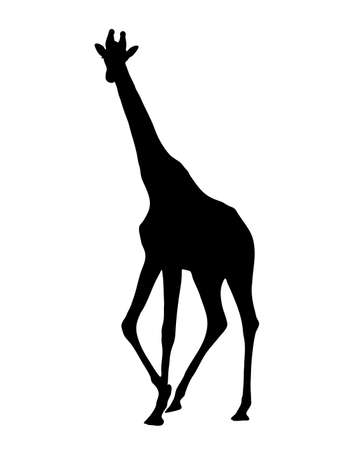 Digitally handdrawn Silhouette of a giraffe isolated on white background