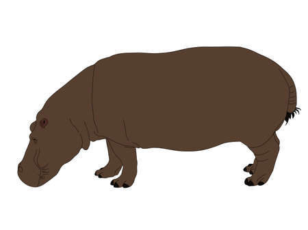 Digitally Handdrawn Illustration of a wildlife hippo isolated on white background