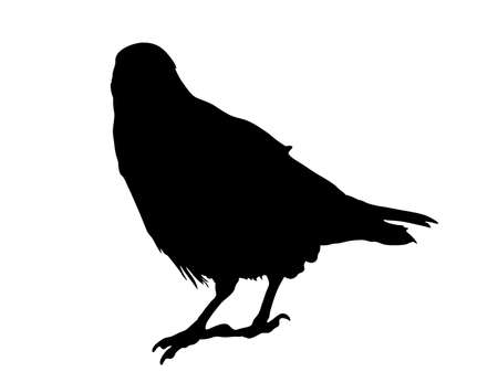 Digitally handdrawn Silhouette of a crow isolated on white background