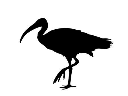 Digitally handdrawn Silhouette of a sea bird isolated on white background Ilustração