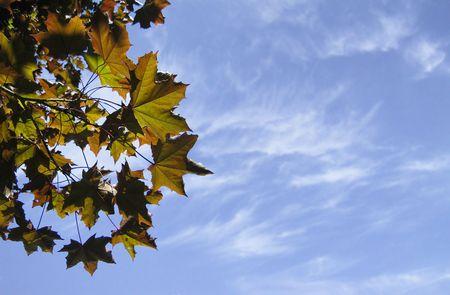 leaves against summer sky; good copy space