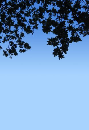 oak leaves silhouetted against clear blue sky; good copyspace Stock Photo