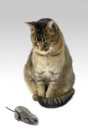 an ounce: cat and mouse - cat regards vintage clockwork tin toy mouse with curiosity or disdain Stock Photo