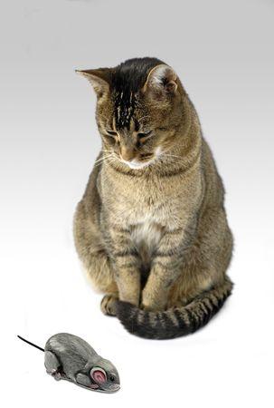 disdain: cat and mouse - cat regards vintage clockwork tin toy mouse with curiosity or disdain Stock Photo