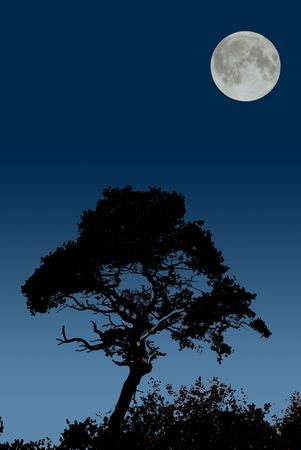 moonrise: moonrise over silhouetted tre Stock Photo