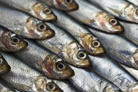 Background of spratts; differential focus - only the head of one fish is sharp, all the rest are blurred Stock Photo