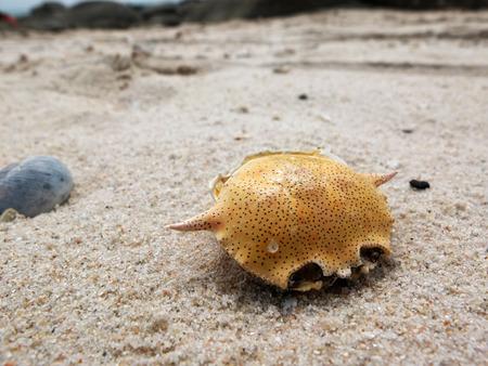 detritus: Dry dead crabs on the huahin beach.
