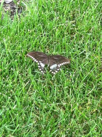 Random butterfly  Stok Fotoğraf