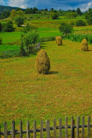 Bundles of hay in Romania, Europe photo