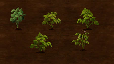 plants growing: Potato plants growing in the field. Digital background raster illustration.