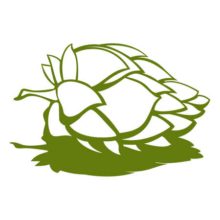 humulus: White hop flower with green shadow. Humulus hops. Beer vector ingredients. Digital background vector illustration Illustration