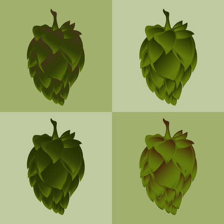 herbal medicine: Green Hop Flower Vector Illustration. The product image for marketing & selling purposes. Also used in herbal medicine as a treatment for insomnia, anxiety, restlessness.