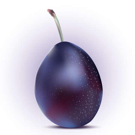yummy: Yummy fruits. Purple plum. Healthy sweets. Bon appetit. Summer treats. Digital isolated on white vector illustration. Illustration