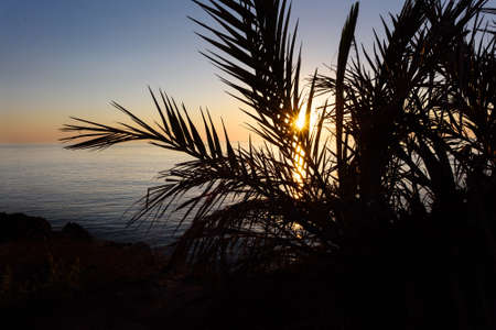 cyprus tree: Sunrise with reflection of light in the water, in protaras paralimni, view through a palm tree, dark blue sea and rocks, cyprus island Stock Photo