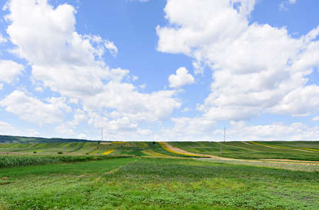 Photo of green wheat, corn and sunflower fields with blue sky, Romania.
