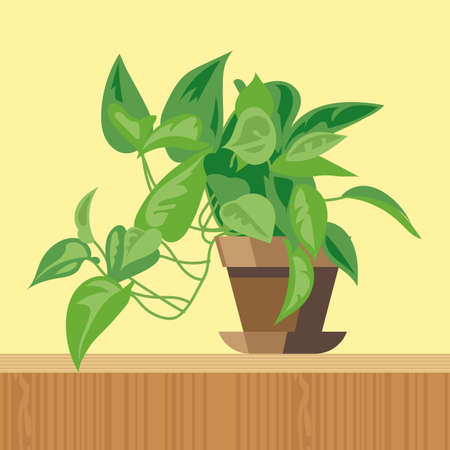 hedge trees: Office plant, flat style. Digital vector image