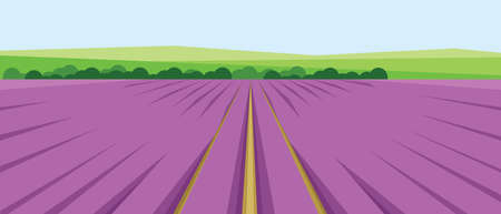 pink hills: Vector abstract green landscape with pink fields, hills and roads, flat zigzag style. Illustration