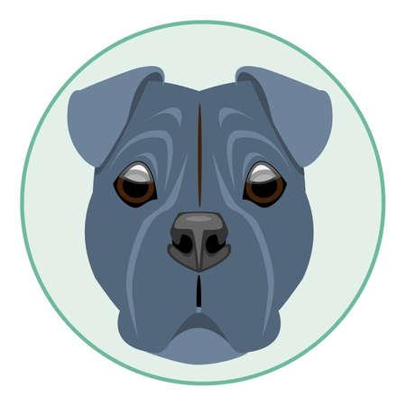boxer dog: Digital vector boxer dog face, in green circle, flat style Illustration