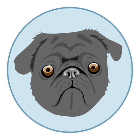 Digital vector pug dog face, in blue circle, flat style
