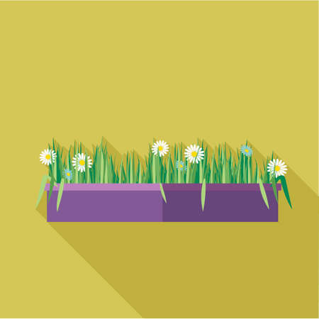 planted: Digital vector green decorative camomile office plant with purple pot, flat style