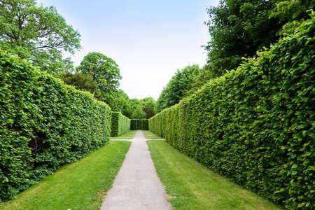 Green labyrinth at schonbrunn garden, the maze at schloss palace, vienna, austria
