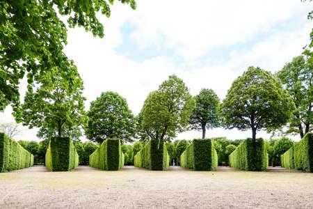 schloss schonbrunn: Green labyrinth at schonbrunn garden, the maze at schloss palace, vienna, austria