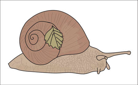 Digital vector snail with a small leaf, hand drawn line art doodle, flat style