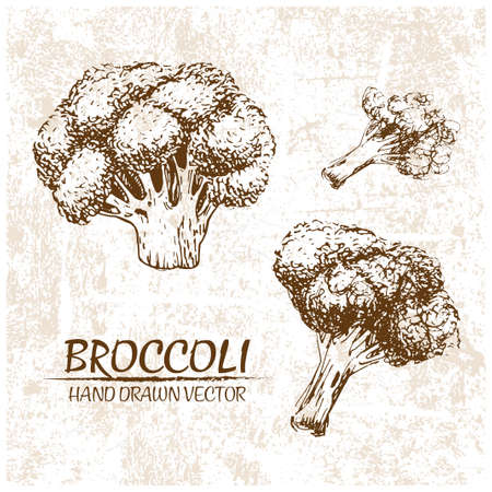 Digital vector detailed broccoli hand drawn retro illustration collection set. Thin artistic linear pencil outline. Vintage ink flat style, engraved simple doodle sketches. Isolated objects
