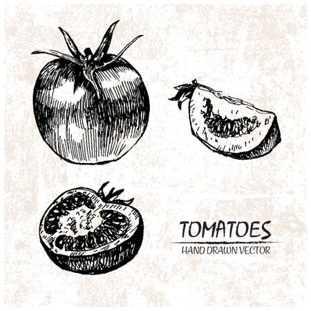 cherry tomato: Digital vector detailed tomato hand drawn retro illustration collection set. Thin artistic linear pencil outline. Vintage ink flat style, engraved simple doodle sketches. Isolated objects