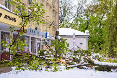 CHISINAU, MOLDOVA - APRIL 21, 2017: Heavy snow on frozen city, spring anomaly, natural cataclysm, falling green trees disaster, general emergency state, exceptional situation Editorial