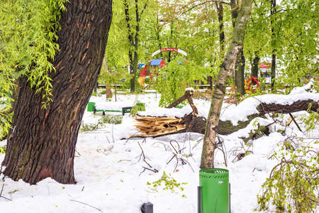 heavy snow: CHISINAU, MOLDOVA - APRIL 21, 2017: Heavy snow on frozen city, spring anomaly, natural cataclysm, falling green trees disaster, general emergency state, exceptional situation Editorial