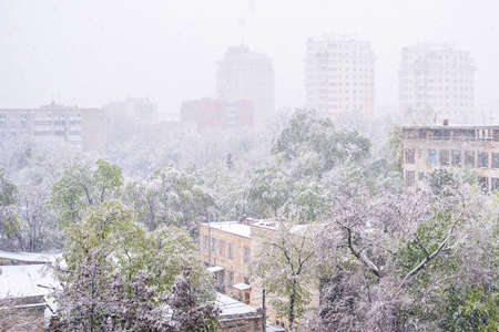 Heavy snow apocalypse in Moldova, frozen Chisinau city, on 20 and 21 of april 2017, spring anomaly, natural cataclysm, falling green trees disaster, general emergency state, exceptional situation Stock Photo