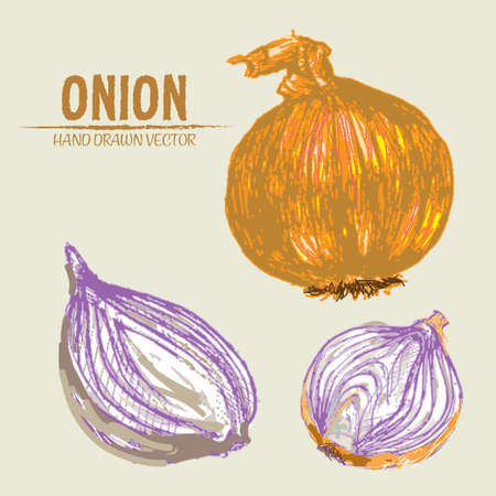 onion rings: Digital vector color detailed onion hand drawn retro illustration collection set. Thin artistic linear pencil outline. Vintage ink flat style, engraved simple doodle sketches. Isolated objects