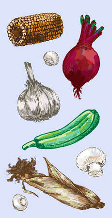 cauliflower: Digital vector detailed color vegetable hand drawn retro illustration collection set. Thin artistic linear pencil outline. Vintage ink flat style, engraved simple doodle sketches.