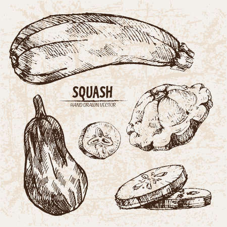 Digital vector detailed line art squash vegetable hand drawn retro illustration collection set. Thin artistic pencil outline. Vintage ink flat style, engraved simple doodle sketches. Isolated
