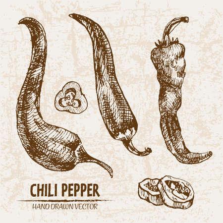 デジタル ベクトル ライン アート チリ pepeper 野菜手描きレトロなイラスト コレクション セットの詳細。概要を薄い芸術的な鉛筆。ビンテージ イン
