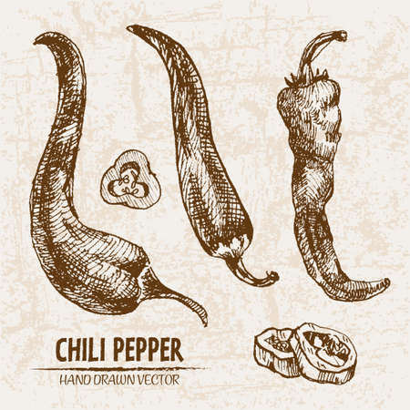 Digital vector detailed line art chili pepeper vegetable hand drawn retro illustration collection set. Thin artistic pencil outline. Vintage ink flat style, engraved simple doodle sketches. Isolated Ilustracja