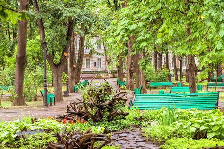 Green central park with flowers in chisinau city centre, rainy day and branches, Moldova