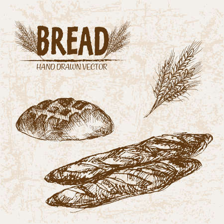 Digital vector detailed line art baked bread and dried wheat hand drawn retro illustration collection set. Thin artistic pencil outline. Vintage ink flat, engraved mill doodle sketches. Isolated Stok Fotoğraf