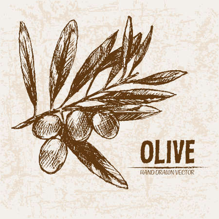 tree logo: Digital vector detailed line art olive and oil hand drawn retro illustration collection set, stove oven. Thin artistic pencil outline. Vintage ink flat, engraved simple doodle sketches. Isolated