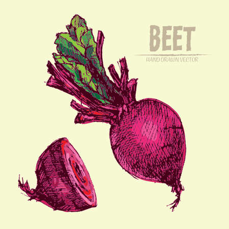 Digital vector detailed line art color beet vegetable hand drawn retro illustration collection set. Thin artistic pencil outline. Vintage ink flat style, engraved simple doodle sketches. Isolated
