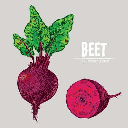 Digitale Vektor detaillierte Linie Kunst Farbe Rübe Gemüse Hand gezeichnet Retro Illustration Sammlung gesetzt. Dünner künstlerischer Bleistift umreißen Vintage Tinte flache Stil, gravierte einfache Doodle Skizzen. Isoliert