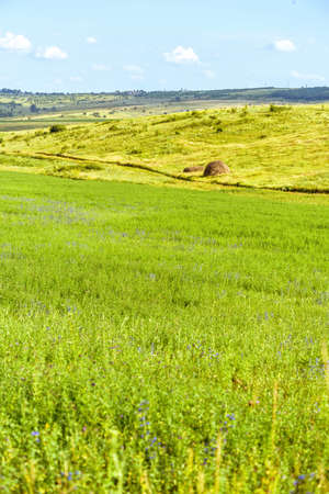 Beautiful green fields landscape with hay grass, hills and forest, fantastic summer time, orhei village countryside, moldova, blue sky, winding road