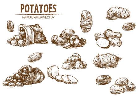 Digitale vector gedetailleerde lijnkunst aardappel plantaardige hand getrokken retro illustratie collectie set. Dun artistiek potloodoverzicht. Vintage platte inkt, gegraveerde eenvoudige doodle schetsen. Geïsoleerd