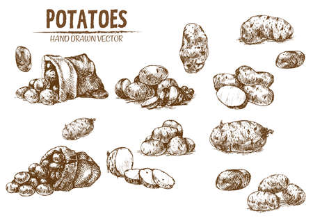 Digital vector detailed line art potato vegetable hand drawn retro illustration collection set. Thin artistic pencil outline. Vintage ink flat, engraved simple doodle sketches. Isolated