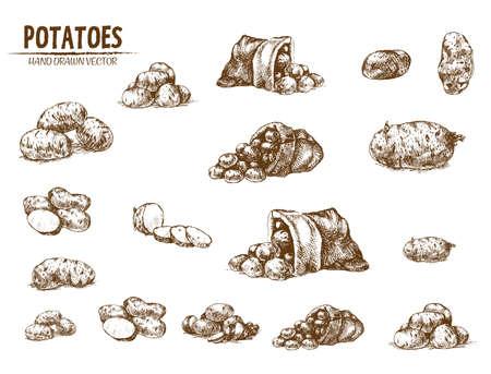 Vettore digitale dettagliata linea arte patata vegetale disegnata a mano retrò serie di raccolta illustrazione. Contorno sottile di matita artistica. Vintage inchiostro piatto, incisi semplici schizzi doodle. Isolato Vettoriali