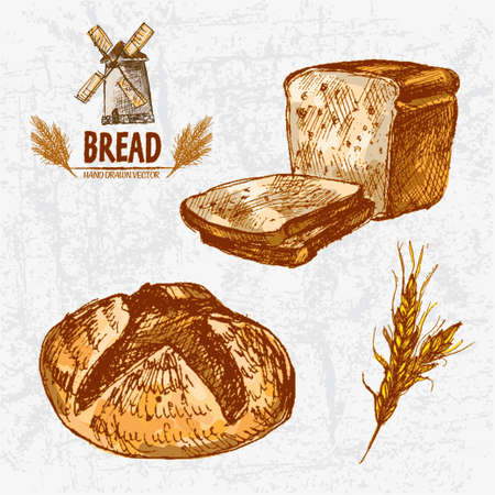 Digital color vector detailed line art golden loaves of round and toast bread, wheat hand drawn retro illustration set. Thin artistic outline. Vintage ink flat, engraved mill doodle sketches. Isolated illustration. Illustration